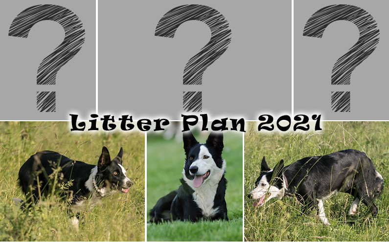 Litter Plan 2021